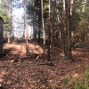 Majestic's Forest Tiny House