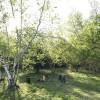 Birch camp
