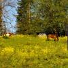 Horse Lovers Paradise - Hillside