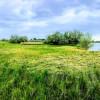 Custer Island (Private Island)