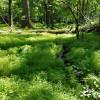 Emerald Oasis Site #1