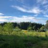 Fern Gully Forest