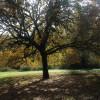 Great Oak Camp