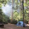 Starry Nights Redwood