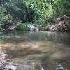 Bala Chitto Creek Campsite