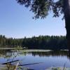 Pelissier Lake North Shore