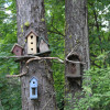 A Wee Place in the Woods Bird Camp