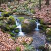 Stream in the Hemlocks