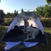 Camp (site 2) with the Alpacas