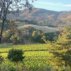 Travel Trailer with Vineyard Views
