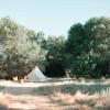Safari-style glamping meadow