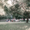 Quiet creekside apple orchard