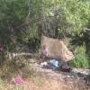 River Campsite 2