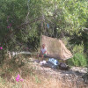 River Site Spider Camp