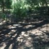 Cosumnes River campsite #2