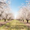 White Blossom Ranch
