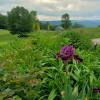 Gardens of Evernest