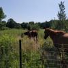 A World Away Farm, LLC