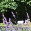 Lavender Farm Camping