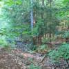 Wild campsite near Farm lawn