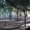 Campsite on the Santa Fe River
