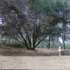 Shady Oak Grove at Finnon Lake -T16
