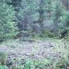 Rainbow Gulch Creekside