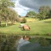 Luxury Cabin on Ranch- Pet Friendly
