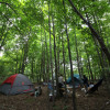 Woodland Dwelyng at Steady Slope