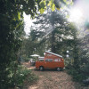 Westy in the pines.