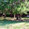 Cedar Creek Farms