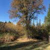 Oak Tree Tent Site