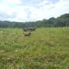 Site 3: Pastures Edge