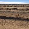OHV Dream - Desert Paved Roadside
