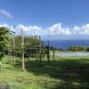 Hamakua Coast Farm - Ocean Views