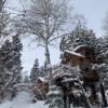 Dreamy Treehouse Above Park City