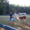 Llama Lodge Camping