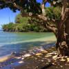 Kauai Tropical Glamping!  KAUAI