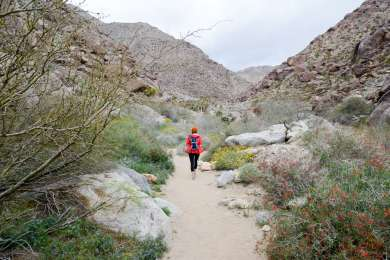 Your campsite is just a short walk from the Borrego Palm Canyon Trailhead, which leads to a refreshing palm oasis.