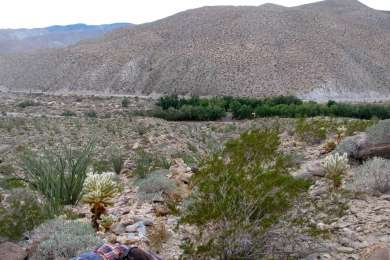 Tamarisk Campground from Cactus Trail