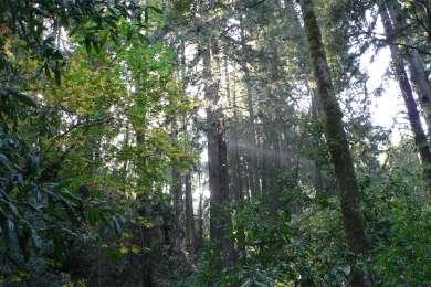 West Ridge Trail Camp