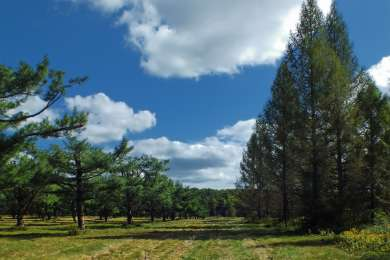 Simon B. Elliott Park Campground