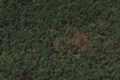 Mistletoe State Park Campground