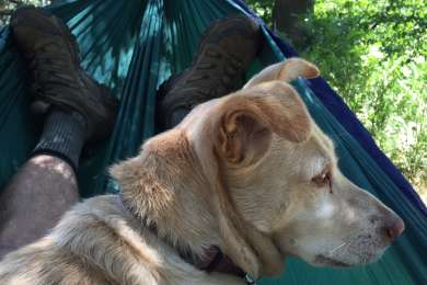 Ethel joined me for some hammock time.
