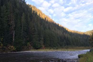 A beautiful spot to camp along the St. Joe River - Turner Flat Campground is just upstream from Avery.