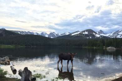 A moose reflects on what makes life great.