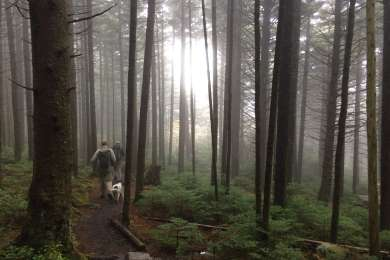 Hiking down Roan mountain on foggy morning.