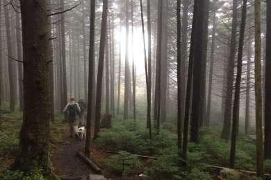 Hiking down Roan mountain on foggy morning.