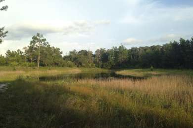 Hidden Pond as seen from the Florida Scenic Trail - part of the Ocala National Forest