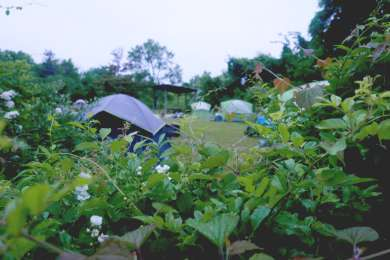 Foliage surrounding the camp sites